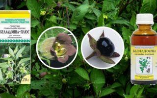 Белладонна (Atrpa belladnna) — травянистое растение из рода Красавка, все о гомеопатии