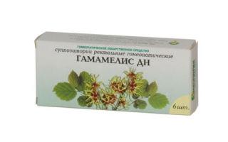 Гамамелис — все о гомеопатии